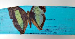 side of blue butterfly nesting tray