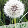 Sunday Sentiment {four–the one about wishes}