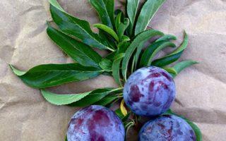 Plum Blueberry Galette