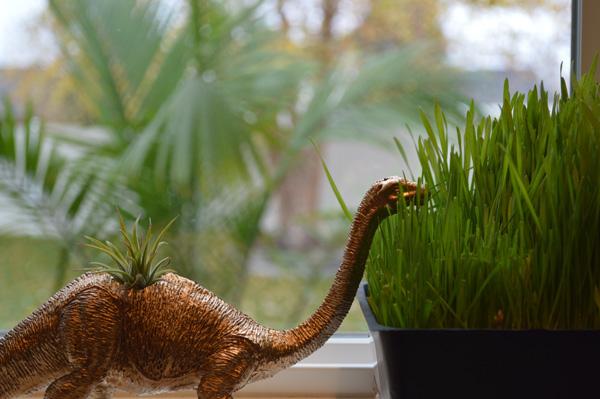 Brontosaurus air plant holder