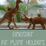 Dinosaur Air Plant Holders for the Young and Young at Heart
