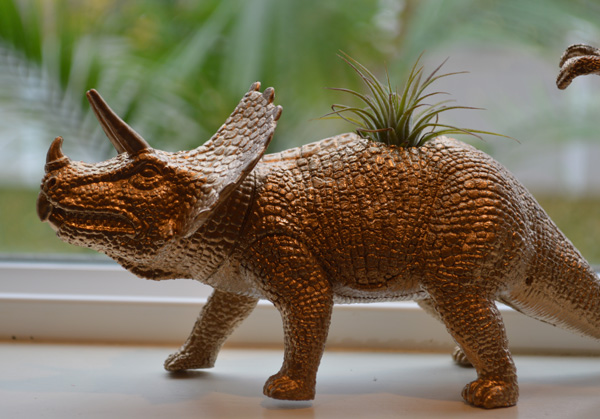 Triceratops-Air-Plant-Holder